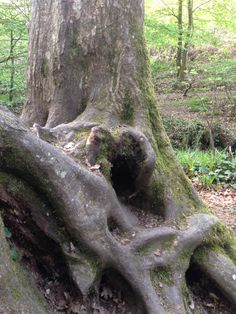Heart shape in the sacred forest of Broceliande , Britany, France. The forest of the legend of the graal