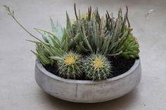 Garden Tribe Class | Modern Indoor Succulent Container