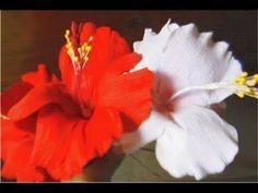 DIY - How to Make Hibiscus Paper Flower for Room & Gift Box Decoration, Hair Bow - YouTube