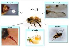 Easy Writing, Bee Happy, Fauna, Math Activities, Projects To Try, School, Montessori, Dutch, Kids