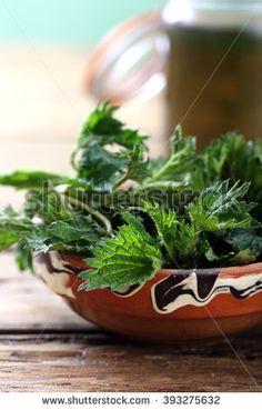 stinging nettles leaf on kitchen rustic table background