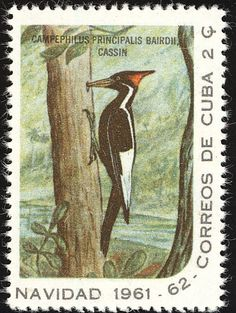 Ivory-billed Woodpecker stamps - mainly images - gallery format