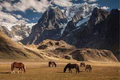Horses grazing under Siula Grande in Cordillera Huayhuash Andes Peru