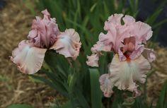 www.floramama.ca l Photo:Stéphane Cocke Bouquet, Nature, Rose, Flowers, Plants, Most Beautiful Flowers, June, Pink, Bouquets