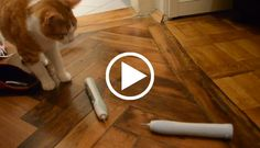Cats vs. Electric Toothbrushes