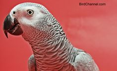 First impressions are important for people and parrots. If someone in the family got off on the wrong footing with your pet bird, find out how you can fix their relationship.