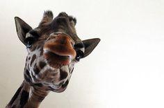 Exquisite Animal Photography