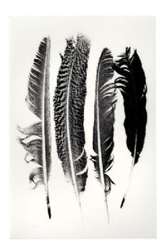Feather Transfers for use on ceramics glass wood paper