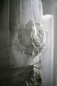 joli détail de rose