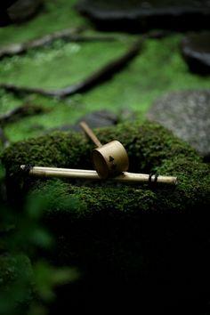 garden / kyoto