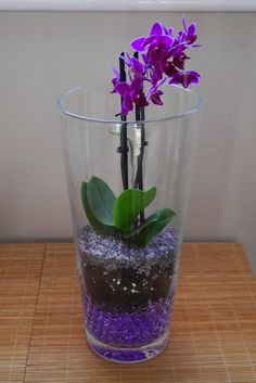 Orquídea mariposa mini plantada en gel dentro de jarrón de cristal #mrwashisancreation
