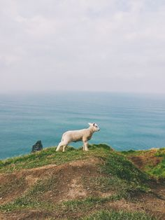 See more of megancorkery's VSCO. Pet Sheep, Cider House, Lord Is My Strength, Counting Sheep, Heart Melting, Goats, Funny Animals, Kittens, Cute