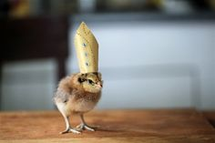 Just because: 11 pictures of chicks in hats - Animal Tracks