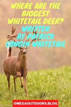 Most of us choose to hunt whitetails in our home state, but where are the biggest whitetail deer? If you just travel one or two states away you will see a definite difference in the deer population.#hunting #hunt #hunter #outdoors #fishing #deerhunting #nature #bowhunting #jagd #chasse #deer #huntinglife #jakt #photography #huntingseason #caza #wildlife #archery