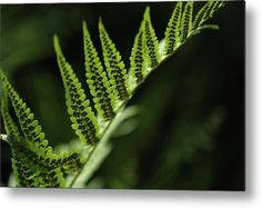 Receipt Of Fern Seeds Metal Print by Jenny Rainbow. All metal prints are professionally printed, packaged, and shipped within 3 - 4 business days and delivered ready-to-hang on your wall. Choose from multiple sizes and mounting options. Art Prints For Home, Prints For Sale, Fine Art Prints, Framing Photography, Fine Art Photography, Framed Artwork, Framed Prints, Rainbow Metal