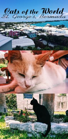 Cute cat pics and some tidbits about the town of St. George's, Bermuda for curious travelers.