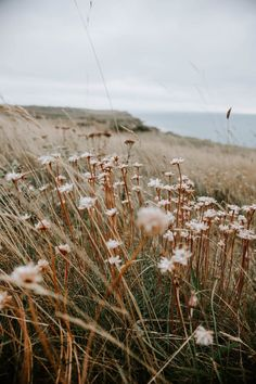 Image uploaded by 𝒜𝓁𝓎. Find images and videos about nature, flowers and sea on We Heart It - the app to get lost in what you love. Aesthetic Backgrounds, Aesthetic Iphone Wallpaper, Nature Wallpaper, Aesthetic Wallpapers, Wallpaper Backgrounds, Field Wallpaper, Nature Aesthetic, Flower Aesthetic, Spring Aesthetic