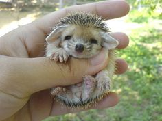 This has got to be the cutest pet ever. It is what my son has been asking to have for the last two years.