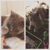 Billie & Bobface Cat | Pawshake Amsterdam