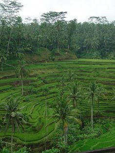 Lush beauty in the cultural soul of Bali (and someplace I'm dying to visit! Bali Yoga, Lush Beauty, Voyage Bali, Beautiful Places, Beautiful Scenery, Amazing Places, World 7, Bali Travel, Yoga Retreat