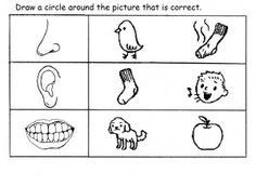 math worksheet : five senses worksheets  worksheets kindergarten science and  : Senses Worksheets For Kindergarten