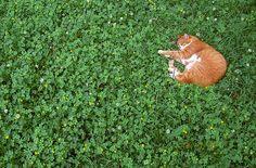 公園のアジ by t_mimizuk, via Flickr