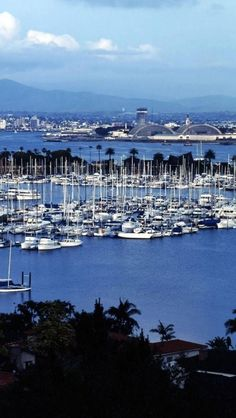 Come to watch the boats and try sea food?: Shelter Island, San Diego, California, Bay, United States,