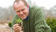 6 saker att använda bikarbonat till i trädgården! | Allas.se Bra Hacks, Garden Planner, Garden Inspiration, Bonsai, Gardening Tips, Flower Power, Flora, Planters, How To Make