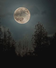 Beautiful Full Moon Photos | full moon, night, over, forest, beautiful | Inspirational pictures