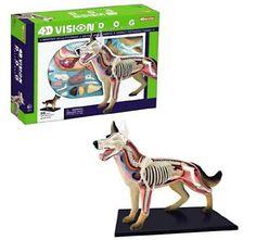 4D Vision Dog Anatomy Model http://www.fatbraintoys.com