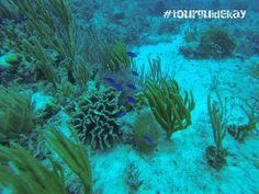 #tourguidekay   #tourguide   #playadelcarmen   #tulum   #cancun   #traveltips   #privatetours   #mexico   #privatetourguide   #diving #scubadiving #diving #underwaterfun