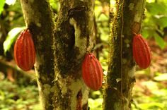 http://www.faszination-regenwald.de/bilder/initiative/itapoa/puertoquito3.jpg