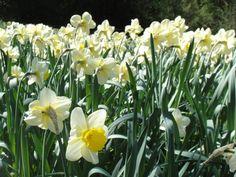 25 aprile nel paradiso fiorito della Lunigiana.