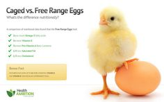 Free range eggs vs caged eggs – What's the Difference Nutritionally? There are some compelling reasons to choose pastured free range eggs vs caged eggs, and not just for the welfare issues. The levels of nutrition in free range eggs are being shown to be Health And Nutrition, Health And Wellness, Health Fitness, Healthy Mind, Stay Healthy, Eating Healthy, Healthy Eats, Free Range, Food Facts