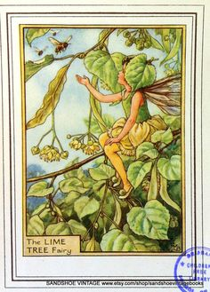 1930s LIME TREE FAIRY Cicely Mary Barker by sandshoevintageprint