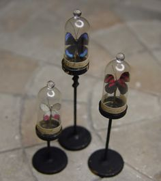 miniature Curiosities and Specimens