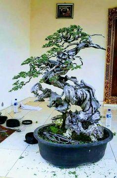 Single Tree, Garden Terrarium, Calligraphy Art, Horticulture, Flora, Backyard, Bonsai Trees, House Design, Japanese