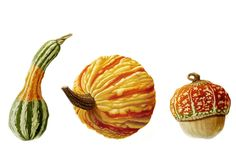 Three Coloured Gourds by Denise Ramsay