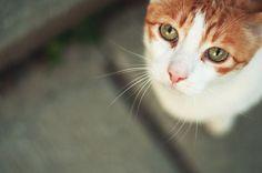 фотогеничные животные из семейства кошачьих