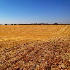 Por los Campos de la Mancha