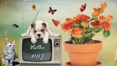 detské priania Dogs, Animals, Baby, Animales, Animaux, Pet Dogs, Doggies, Animal, Baby Humor