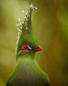Find and save ideas about Colorful birds, Pretty birds, Beautiful birds and Tropical birds. Exotic Birds, Colorful Birds, Exotic Pets, Exotic Animals, Green Birds, Tropical Birds, Rare Birds, Exotic Names, Tropical Animals