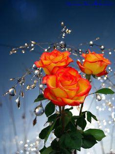 La vita è un vaso invisibile e tu sei ciò che vi getti dentro. Getta invidia, insoddisfazione e cattiveria e traboccherà ansia, getta gentilezza, empati... - Giusy Romano - Google+ #beautifulflowerspictures