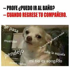 Memes de perritos