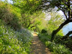 Walking the cliffs - Guernsey Island