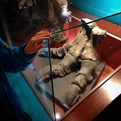#dinosaur #foot #naturalhistorymuseum #London (MargeritaWargola/Instagram)