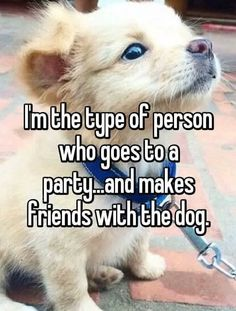 I'm the Type of Person Who Goes to a Party... And Makes Friends with the Dog <-- Yes, yes I am.