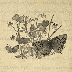 Butterflies Image Digital Download Butterfly Illustration Graphic Printable Antique Clip Art. High quality printable digital graphic clip art. This vintage high resolution digital artwork is great for printing, iron on transfers, tea towels, t-shirts, pillows, and more great uses. Real antique art. For personal or commercial use. This graphic is high quality at 8½ x 11 inches large. Transparent background version included with every graphic.