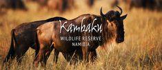 Namibia Safari|Kambaku Ahhh, einer der schönsten Orte in Afrika :-)