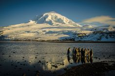 Heard Island and McDonald Island, Australian Antarctic Division